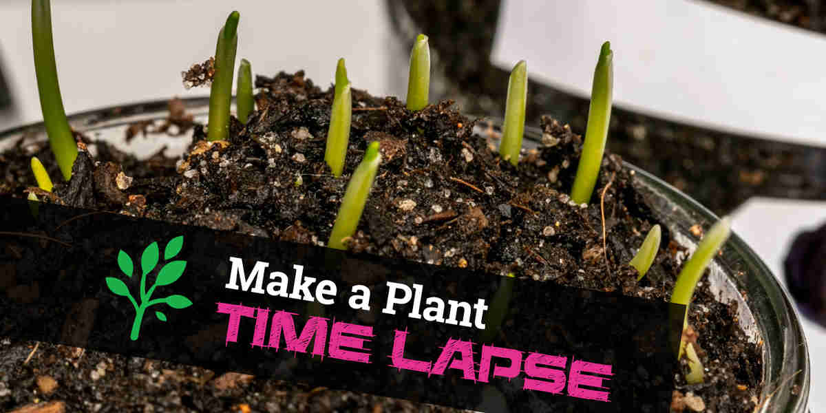 How To Make a Time Lapse Video of Plants Growing